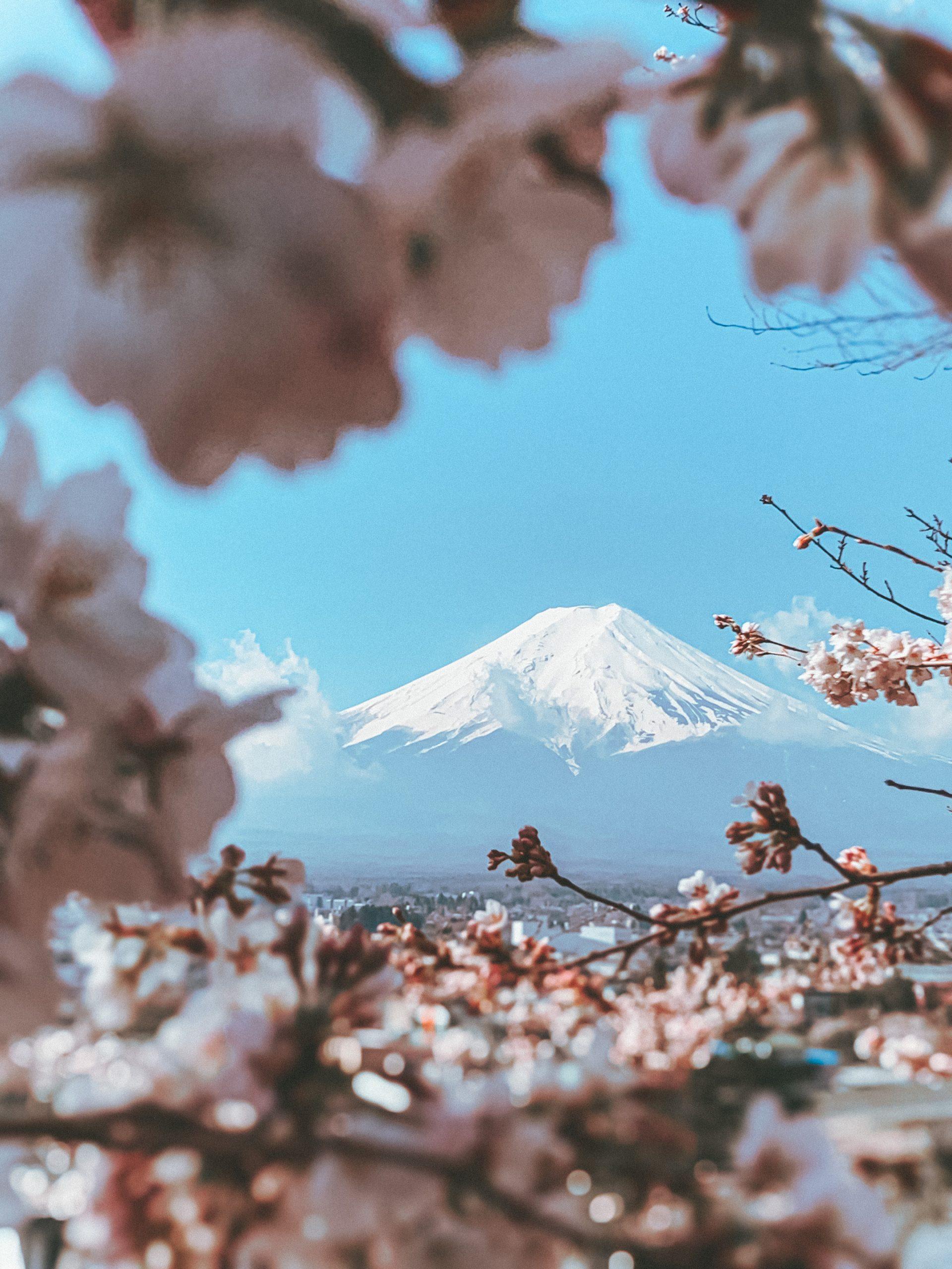 mont-fuji-cerisier
